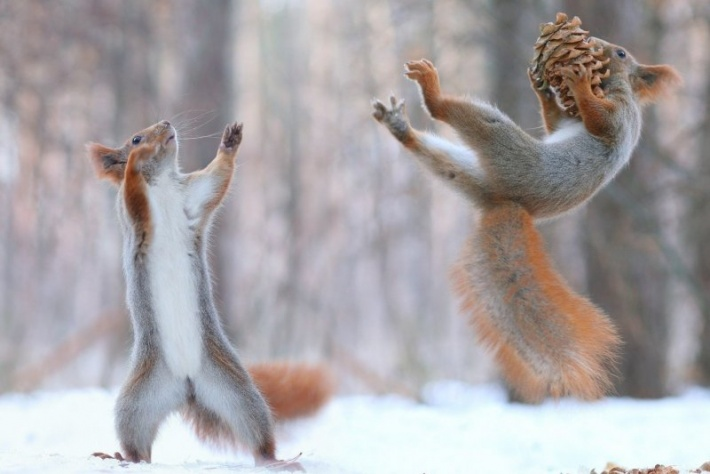 Минилонга «Зима близко» - Альтернатива и Электронное танго!