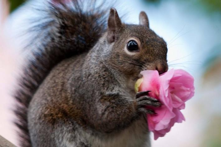 Минилонга «Жизнь в розовом цвете» - Альтернатива и Электронное танго!