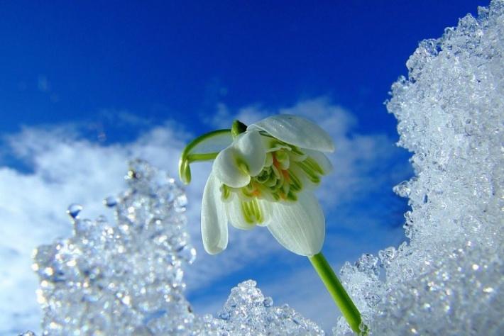 Поздравление с первым днём весны в смс